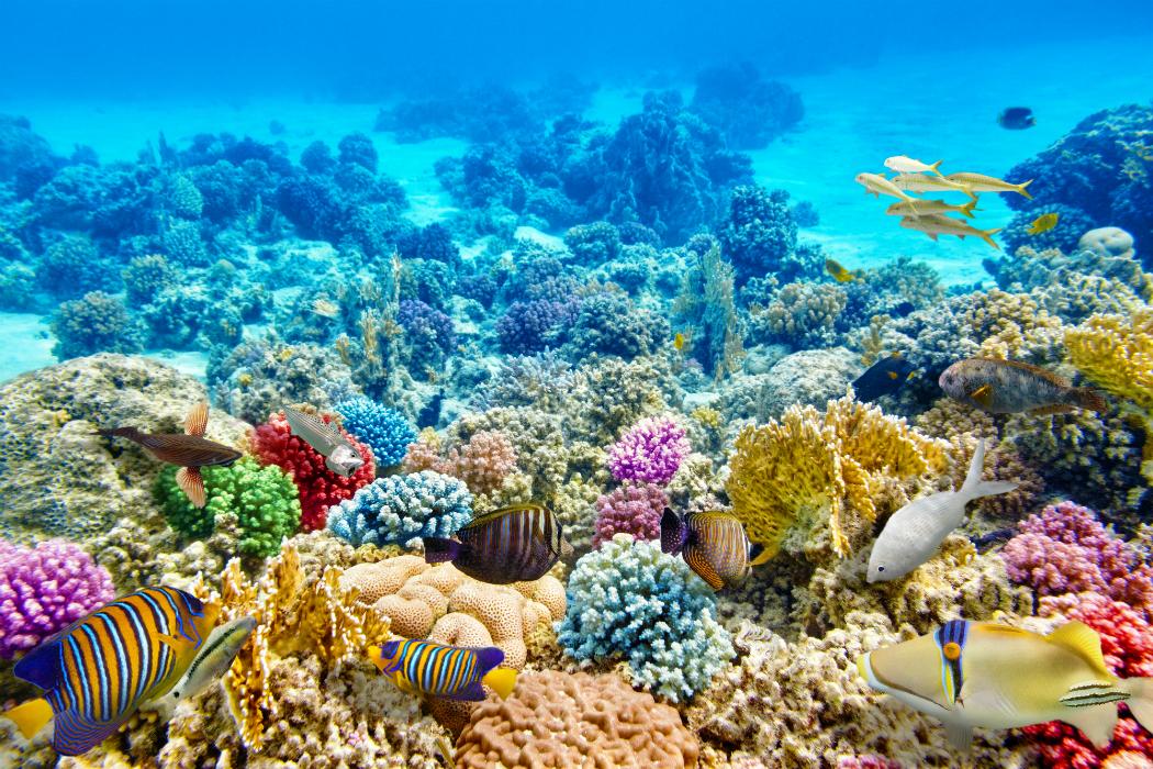 Nuevas Esperanzas Para Los Arrecifes Coralinos