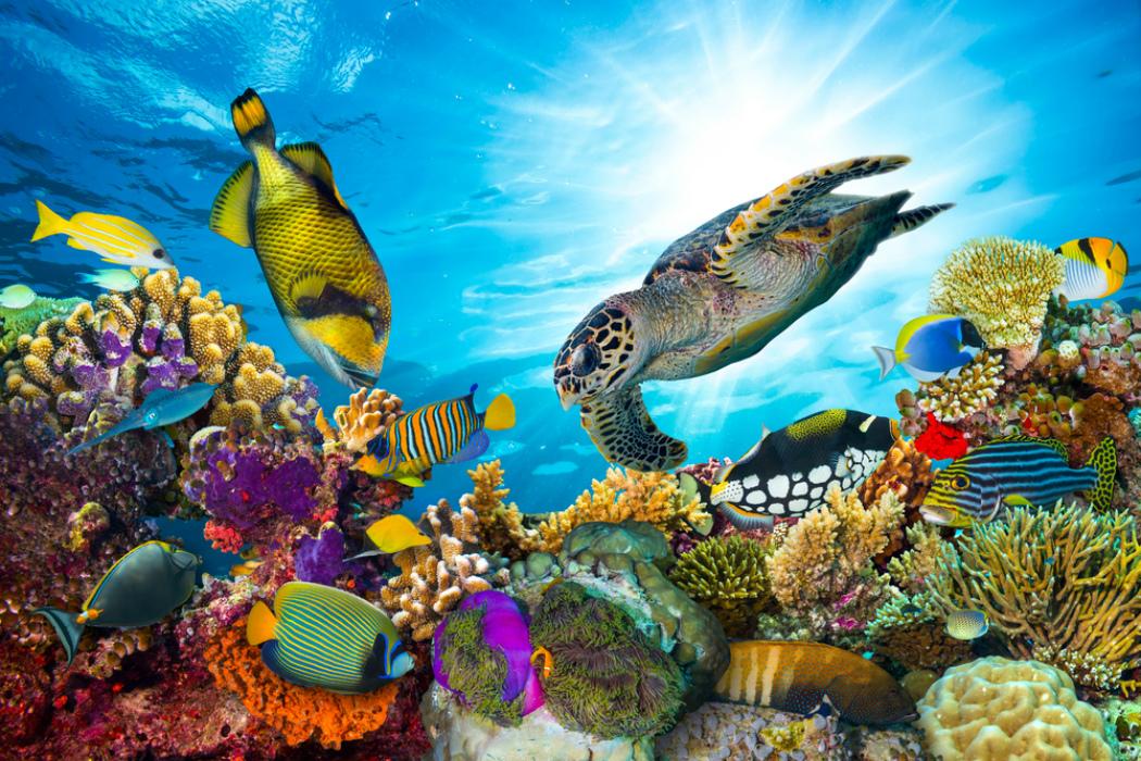 Los Arrecifes Más Importantes Del Mundo