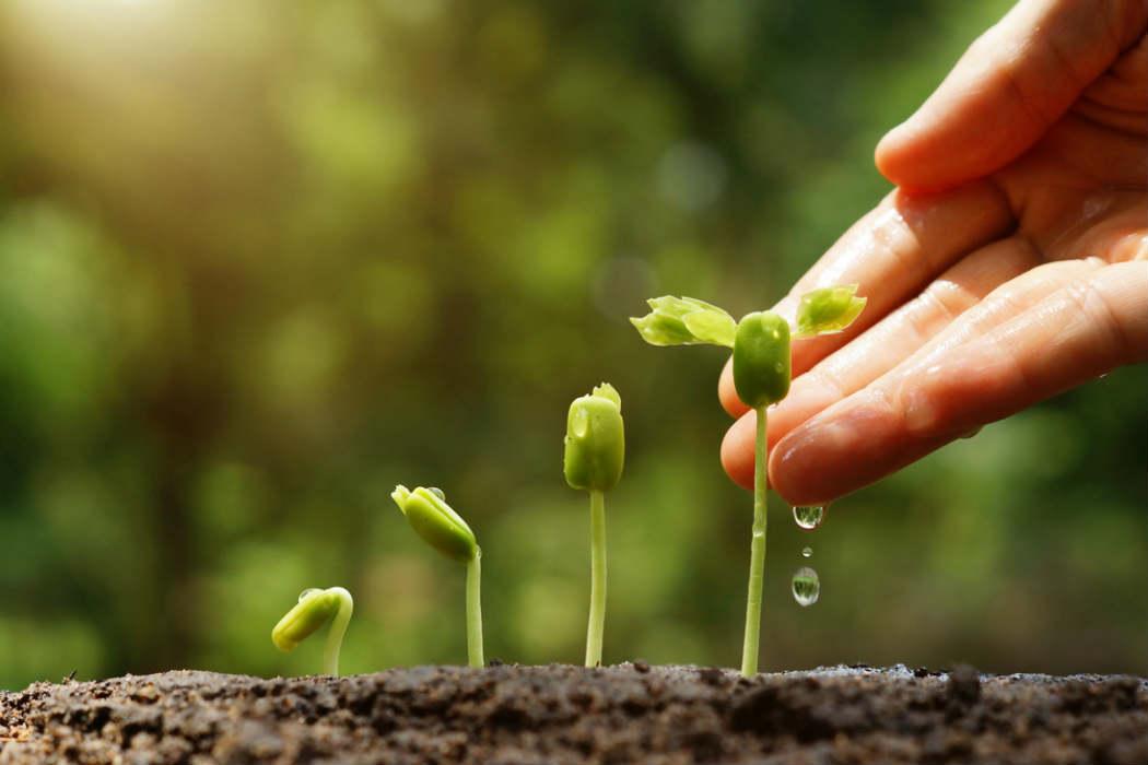 T cnico en cultivos vegetales capac tate para el empleo for Sustrato para mesa de cultivo