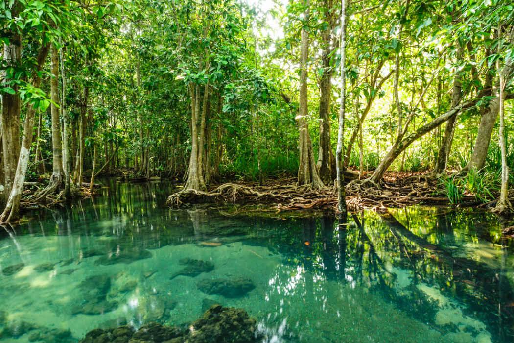 Se recupera extensi n de manglares en m xico for Acuarios zona norte