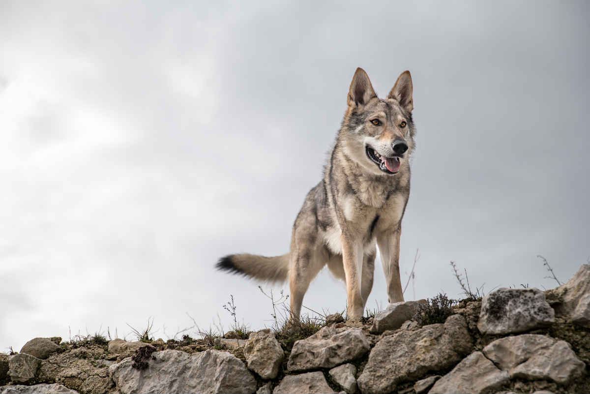 Museo del Desierto, un santuario para el lobo mexicano